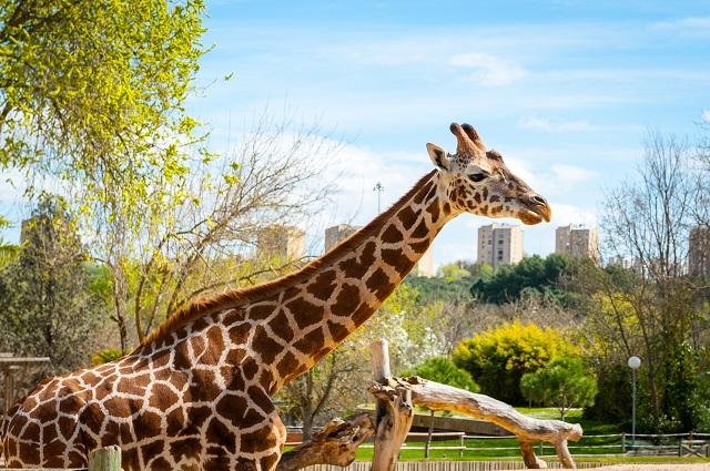 Zoo Aquarium De Madrid Un Paseo En Familia Para Aprender Sobre La Vida Animal